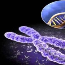 تاثیر فناوری نانو بر زیسـت شناسی سلول های بنیـادی