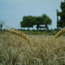 نانو و علوم کشاورزی
