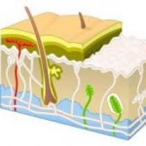 نانوذرات و دارورسانی از طریق پوست