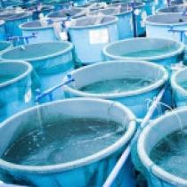 کاربرد نانوحباب ها در تصفیه آب- 2