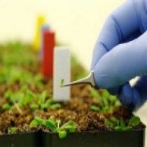 10- معرفی کاربرد نانوفناوری در صنایع غذایی