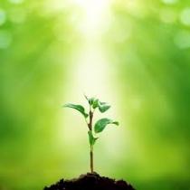 نانومواد مهندسی شده و گیاهان-سمیّت گیاهی و بیوترانسفورماسیون 1