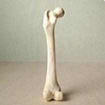 استخوان ها نانوکامپوزیت های طبیعی