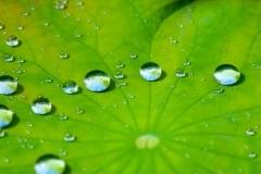 فوق آب گریزی و فوق آب دوستی در حیات